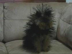 The Original Static Dog
