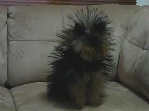 The Original Static Dog