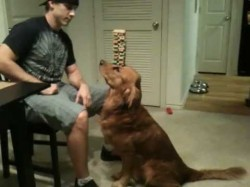 Behind the Scenes: The Making of Jenga Dog
