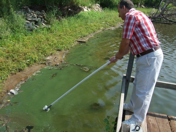 Lethal Ingestion: Blue-Green Algae A Danger For People and Pets