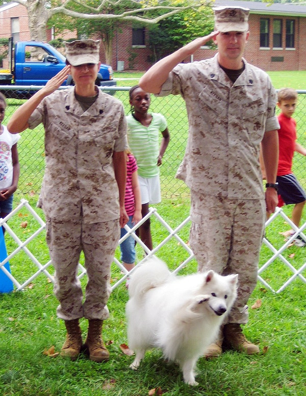 how to train a dog to salute