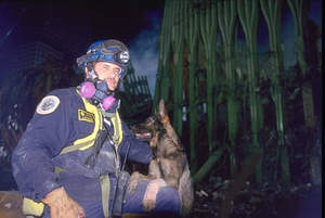 AKC Funds Health Study for 9/11 Search and Rescue Dogs