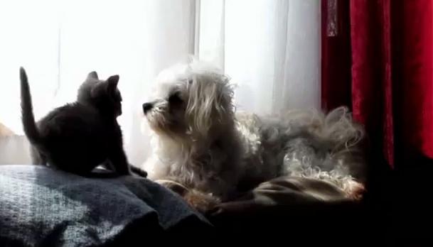 The Saturday Pet Blogger Hop: Best Frenemies