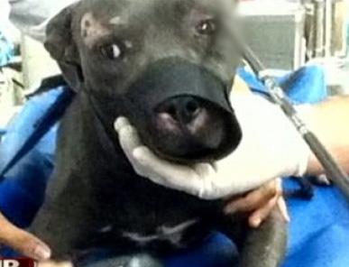 Dog Survives Arrow Shot Through Head, Finds New Home