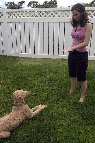 Survey of Nationwide Network of Dog Trainers Contradicts Conventional Beliefs