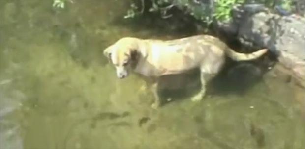 The Saturday Pet Blogger Hop: Doggone Fishing