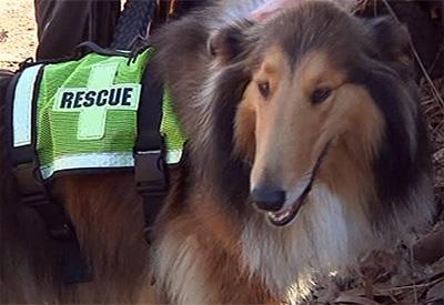 Lassie to the Rescue