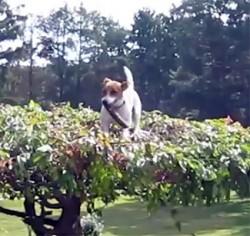 Tree Climbing Terrier