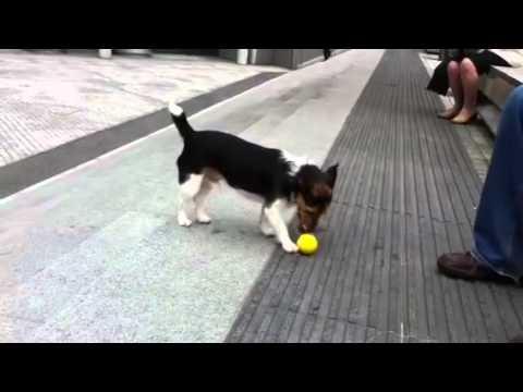 Dog Plays Solo Fetch