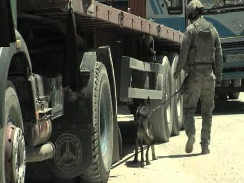 The 455th ESFS Military Working Dogs