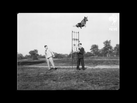 Vintage: World's Greatest Jumping Dog