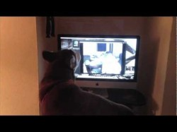 Dog and Owner Howling on Webcam