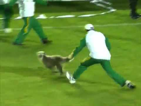 Dog Interrupts Copa Sudamericana Soccer Match