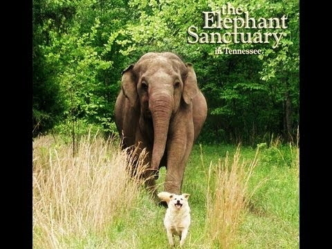 Sanctuary Elephant Mourns Loss of Best Friend