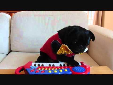 Piano Dog