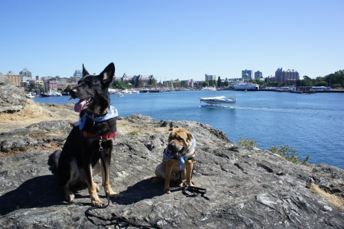 Visiting Pet Friendly Victoria, BC