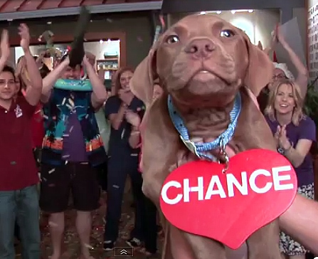 SPCA of Wake County Lip Dub Video: Take a Chance On Me