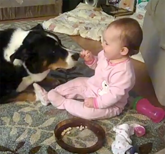 Preparing Your Pup For A New Baby Life With Dogs