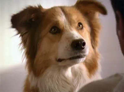 Now Hear This: TV Commercial Made for Dogs