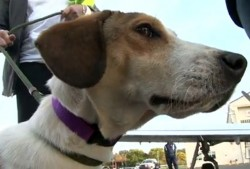 Miracle Dog Survives Alabama Gas Chamber, Finds New Home