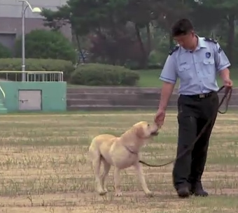 Super Clone Sniffer Dogs