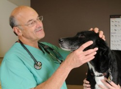 Dr. Shelly Rubin examines Larry at Blum Animal Hospital