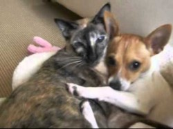Caught in the Act: Dog Falls for Cat