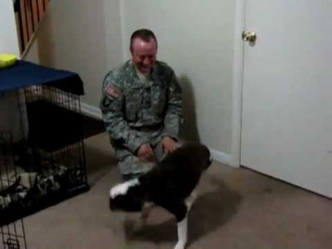 Dog Welcomes U.S. Soldier Home from Deployment