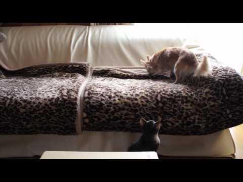 Mischievious Kitten and Good-natured Dog