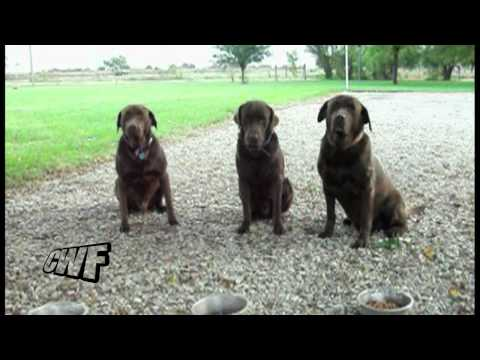 The Saturday Pet Blogger Hop: Patient Puppies