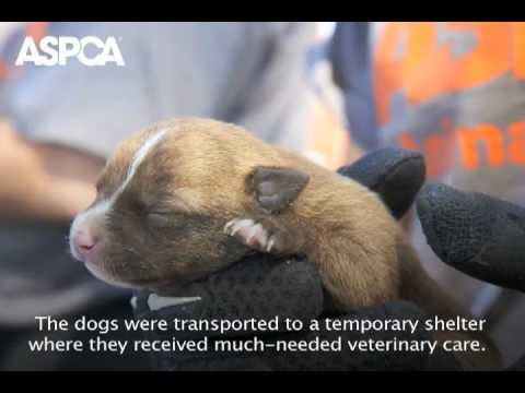 ASPCA Raids AR Puppy Mill, Rescues 175 Small Dogs
