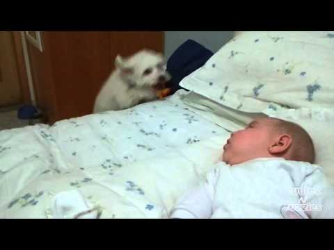 Bouncing Puppy Loves Baby