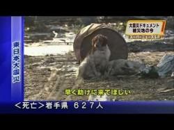 Tsunami Dog Found
