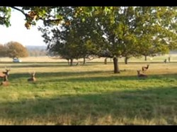 Fenton Chases Deer in Richmond Park