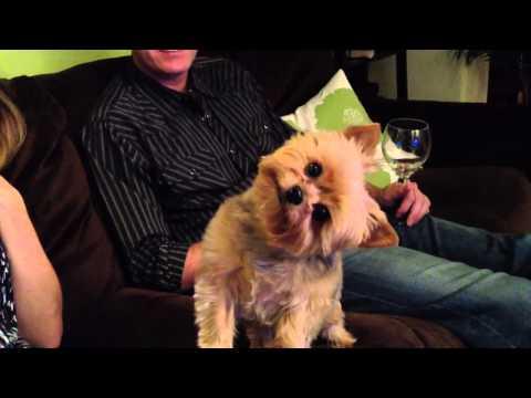 Cute Dog Does Thanksgiving Head Tilt