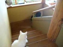 Dog Scared of Cat