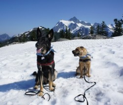 Pet Friendly Hiking At Mount Baker