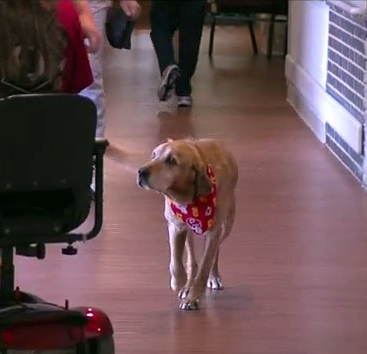 Senior Shelter Dog Lands Full Time Job at Veteran's Hospital
