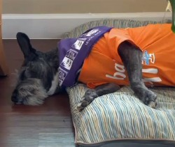 Former Pound Puppy is Goodwill Ambassador at Alzheimer's Home