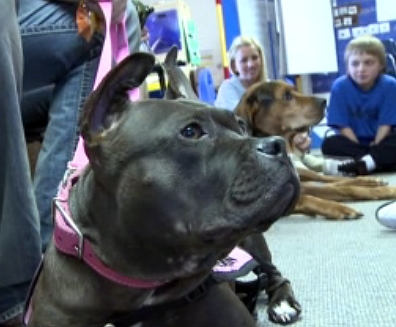 Gremlin Goes to School: Pit Bull is Teacher's Aide