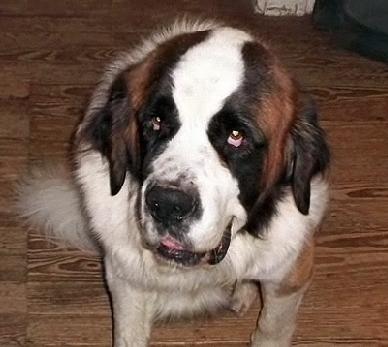 Family Adopts Dog, Dog Saves Family
