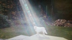 Photo: Beam of Light Shines on Fallen Soldier's Dog
