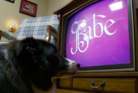 Jake Loves Babe: Dog Fascinated by Children's Movie