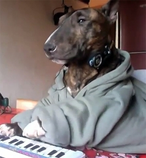 The Saturday Pet Blogger Hop: Keyboard Dog