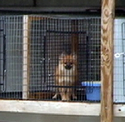 Investigation Finds NY Pet Stores Supplied by Puppy Mills