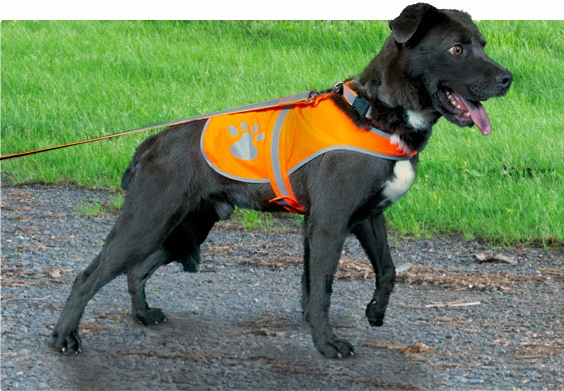 Giveaway: Petflect Outdoor Reflective Safety System