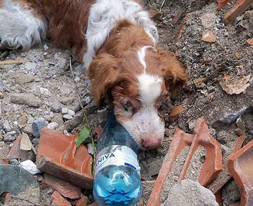 Dog Rescued 40 Hours After Being Buried Alive