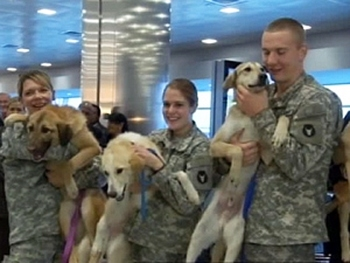 Troops Reunited With Canine Friends From Afghanistan