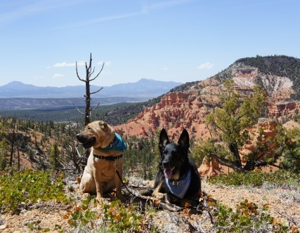 For the Love of our Pet Friendly National Forests