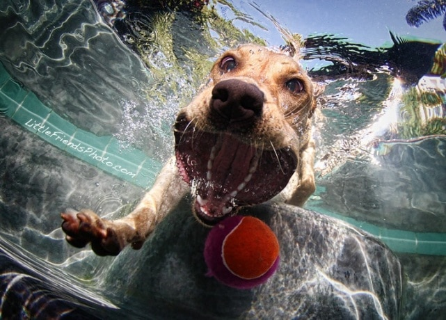 Photo Feature: Diving Dogs